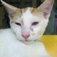 Photo taken at Montclair Township Animal Shelter by robert g. on 7/28/2012