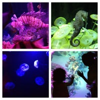 Photo taken at Sea Life Aquarium by R G. on 5/14/2012