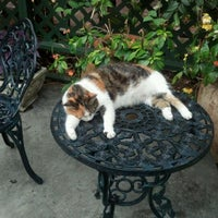 Photo taken at Ernest Hemingway Home & Museum by Michael M. on 5/31/2012