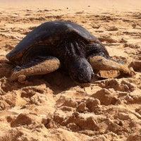 Foto tomada en Poipu Beach por Nik O. el 1/16/2012