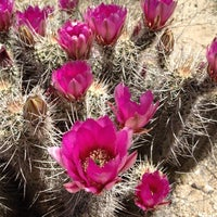 Photo taken at Saguaro National Park by Gary M. on 4/17/2012