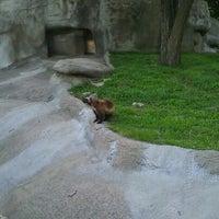 Photo taken at Wolverine Habitat by Brian C. on 8/22/2012