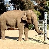 6/1/2012 tarihinde Ricardo S.ziyaretçi tarafından Elephant Odyssey'de çekilen fotoğraf