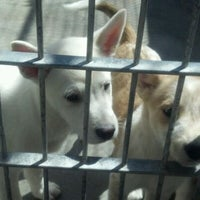 Photo taken at Pasadena Humane Society & SPCA by Chanda D. on 4/3/2012