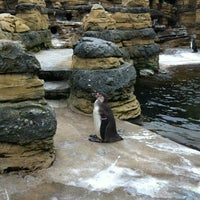 Photo taken at Penguin Exhibit by Patty C. on 6/27/2012