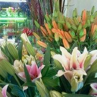 Photo taken at arte floral by Cesar V. on 1/15/2012