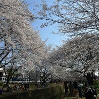 Photo taken at 千本桜 by Naoki A. on 4/8/2012