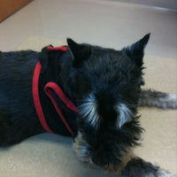Photo taken at Four Paws Animal Hospital by Meghann S. on 9/8/2011