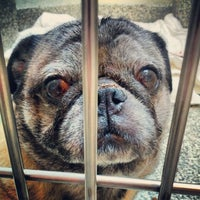 Photo taken at MSPCA Adoption Center by Chris B. on 8/3/2012