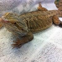 Photo taken at Chicago Exotics Animal Hospital by Jay B. on 7/26/2012