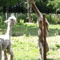 Photo taken at Alpaca Central by Jason B. on 6/22/2012