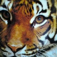 Снимок сделан в Palm Beach Zoo пользователем Katina B. 9/19/2011