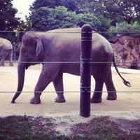 Photo taken at Ueno Zoo by Hiroyuki A. on 11/3/2011