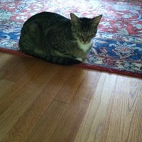 Photo taken at Chloe's Cat Corral by Chloe H. on 7/21/2011