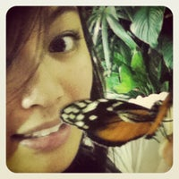 Photo taken at The Butterfly Conservatory at the American Museum of Natural History by Jo . on 10/24/2011