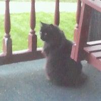 Photo taken at Black Cat Spotting by Chloe E. on 3/29/2012