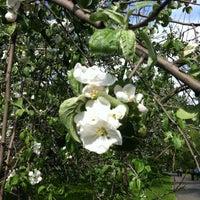 Снимок сделан в Яблоневый сад пользователем Anna M. 5/12/2012