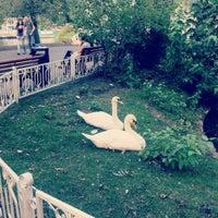 Photo taken at Swan Lake by Alena K. on 8/15/2012
