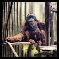 Photo taken at Zoo Dresden by Andreas S. on 4/15/2012