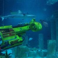 Photo taken at SEA LIFE Aquarium by Harvey P. on 8/8/2012