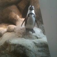 Photo taken at Penguin Tank by Joseph L. on 1/11/2012