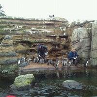 Photo taken at Penguin Exhibit by Likkit P. on 1/28/2012