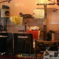Photo taken at Cafe 子猫の部屋 by Tadanori K. on 12/18/2011
