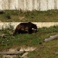 Das Foto wurde bei Bärenpark von Özcan A. am 7/16/2012 aufgenommen
