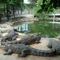 Photo taken at The Million Years Stone Park & Pattaya Crocodile Farm by Manggumbee M. on 12/5/2011