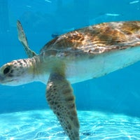 Photo taken at Loggerhead Marinelife Center by Greg F. on 7/2/2012