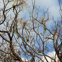 Foto tomada en Parc del Turó del Putxet por Sarah M. el 1/14/2012