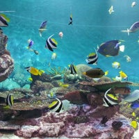 Photo taken at COEX Aquarium by Jung R. on 12/8/2011