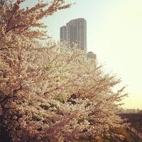 Photo taken at Yangjaechun Trails by yangkoon on 4/17/2012