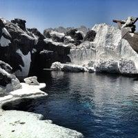 6/28/2012 tarihinde Bryan H.ziyaretçi tarafından Wild Arctic'de çekilen fotoğraf