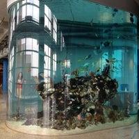 Photo taken at South Carolina Aquarium by Melissa E. on 8/19/2012