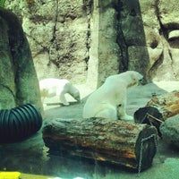 Photo taken at #OccupyPolarBears at @OregonZoo by Troy G. on 6/24/2012