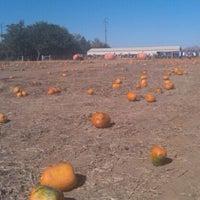 Photo taken at Frazier's U-Pick Pumpkin Patch by Dan H. on 10/29/2011