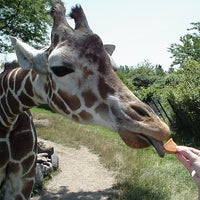 Photo taken at Indianapolis Zoo by Jonathan K. on 7/24/2012