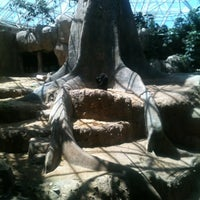 Photo taken at World of Primates at Ft. Worth Zoo by Linico W. on 8/19/2012