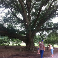 Photo taken at The Kissing Tree by Marvin B. on 7/24/2012