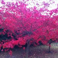 Photo taken at Cambridge University Botanic Gardens by David A. on 10/31/2011
