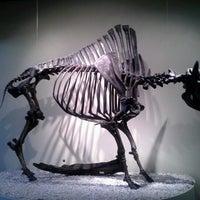 Das Foto wurde bei Page Museum at the La Brea Tar Pits von Jeannette L. am 8/26/2012 aufgenommen