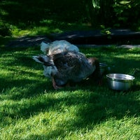 Photo taken at Geese Pen at Public Gardens by KW on 6/17/2012