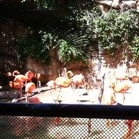 Photo taken at San Antonio Zoo by Micah G. on 5/19/2012
