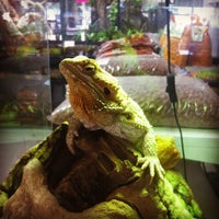 Photo taken at Pinellas County Reptiles And Pets! by Grayson M. on 10/27/2011