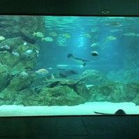 Photo taken at COEX Aquarium by Jiyoun C. on 3/6/2012