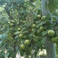 Photo taken at BYU-I Apple Orchard by James V. on 9/10/2011