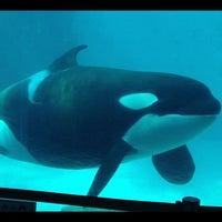 Photo taken at Port of Nagoya Public Aquarium by ずっ さ. on 8/25/2012