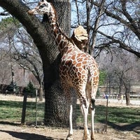 Photo taken at Henry Doorly Zoo and Aquarium by J Hope F. on 3/14/2012