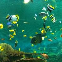 Photo taken at COEX Aquarium by Min-ah L. on 6/2/2012